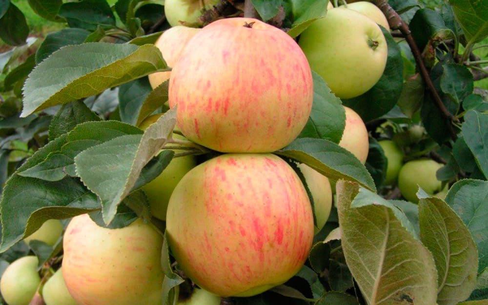 где купить в москве саженцы плодовых деревьев